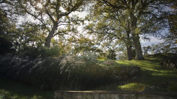 I boschi nei dintorni della Fattoria di Rancaccio